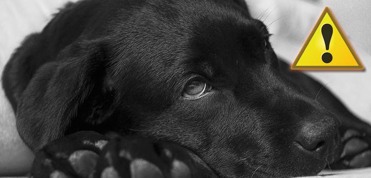 Bőrproblémák kutyáknál