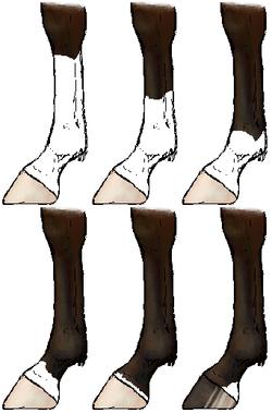 A ló jegyei