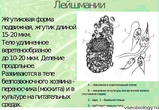 monoklonlis ellenanyagok ksztmnyei pikkelysömörhöz