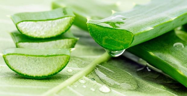 agave pikkelysömör kezelése)