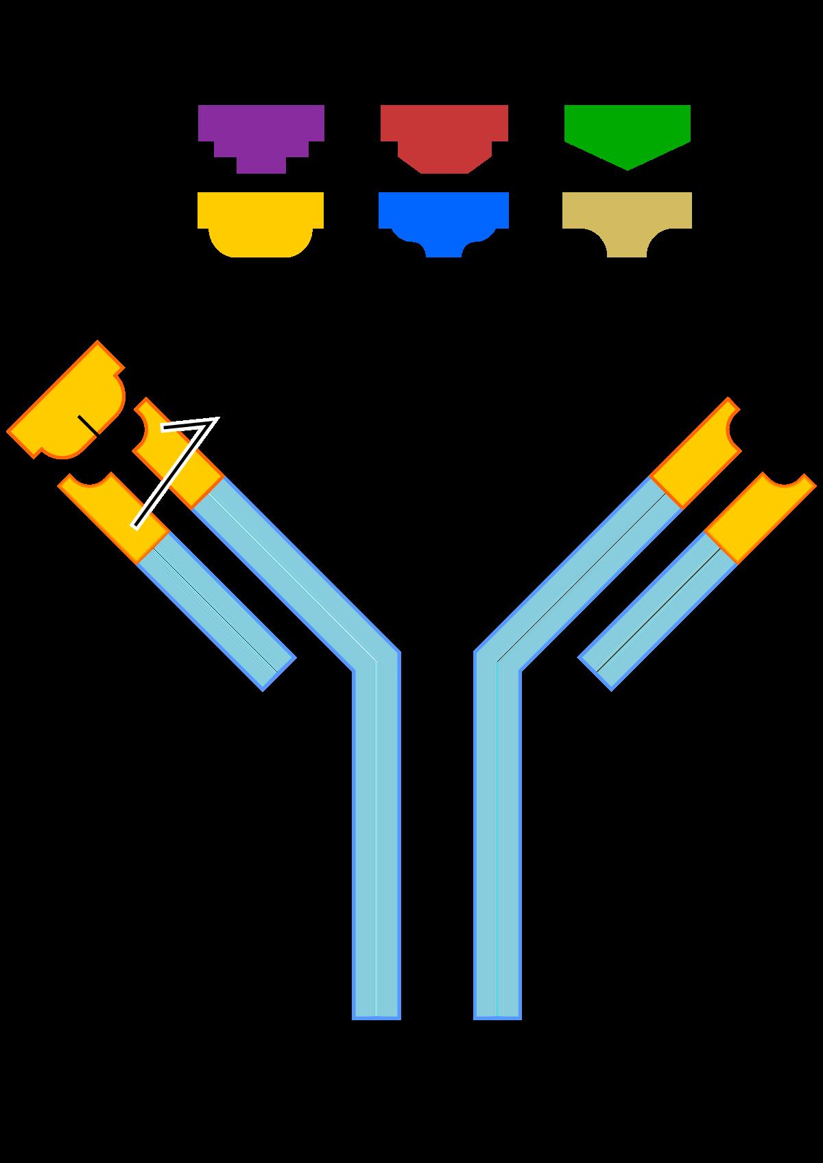 pikkelysömör kezelése monoklonális antitestekkel
